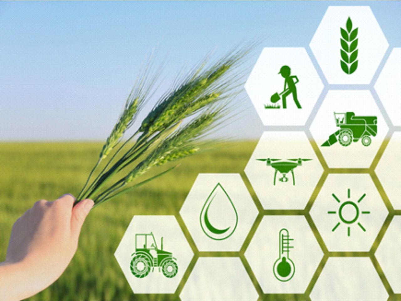 Agri-Business Management: A Change-Maker in the Indian Agricultural Sector